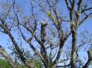 2008 Тропа самурая 3_29